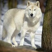Анатолий Корнев on My World.